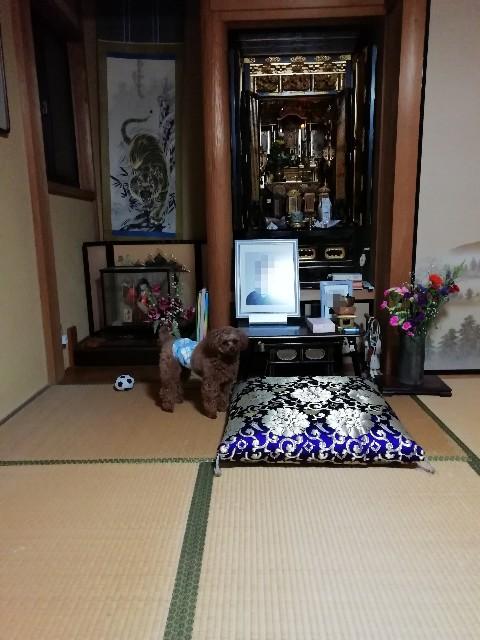 f:id:taruto-rasuku_maaya:20191206181106j:image