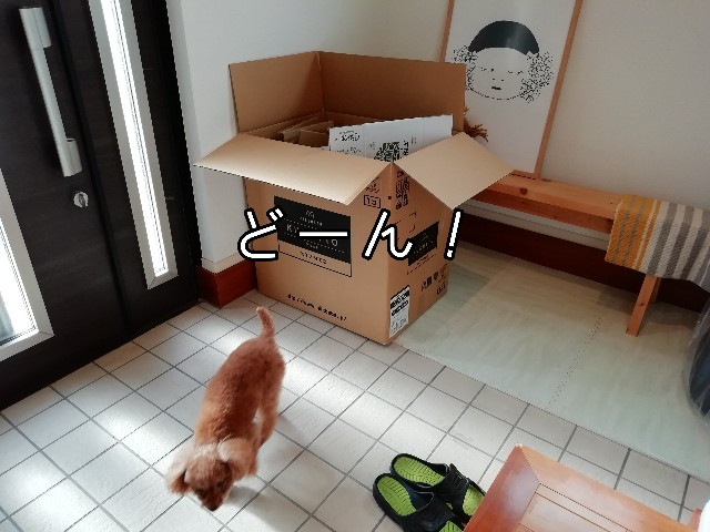 f:id:taruto-rasuku_maaya:20191211183000j:image