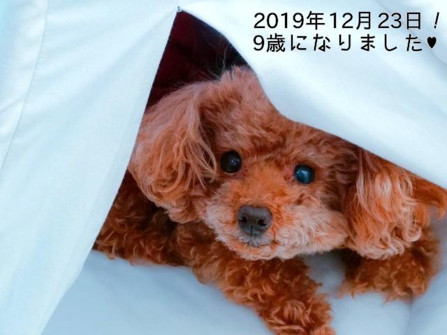 f:id:taruto-rasuku_maaya:20191223201812j:image