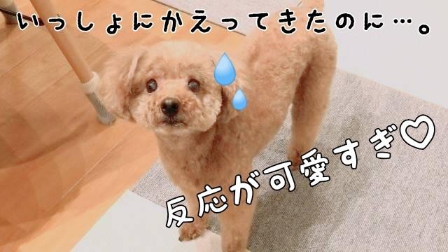 f:id:taruto-rasuku_maaya:20200115185458j:image