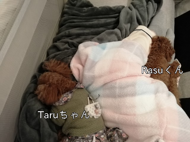 f:id:taruto-rasuku_maaya:20200125125936j:image