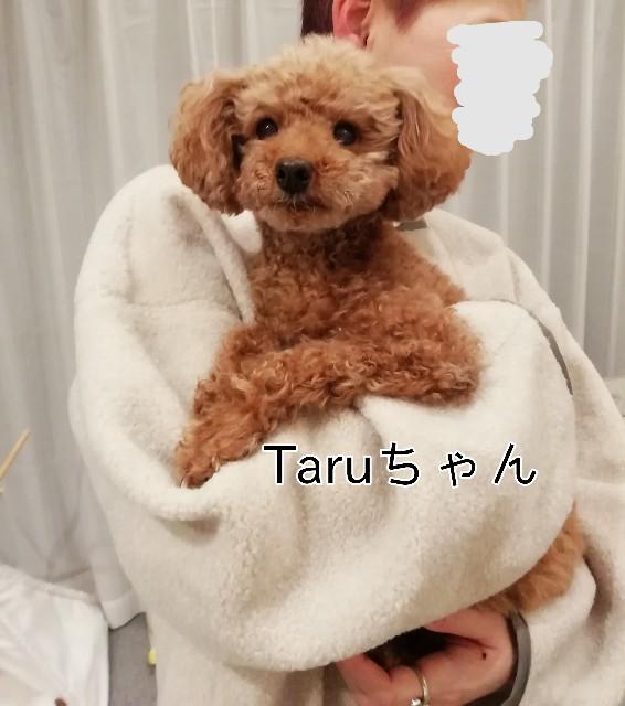 f:id:taruto-rasuku_maaya:20200206194246j:image