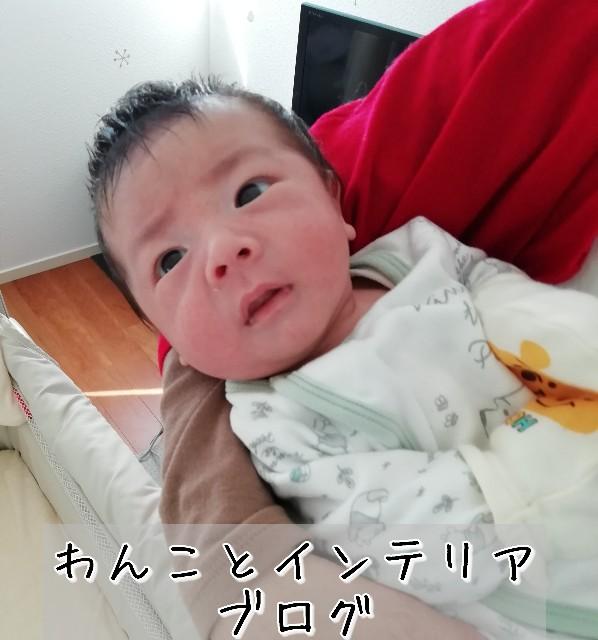 f:id:taruto-rasuku_maaya:20200221135144j:image