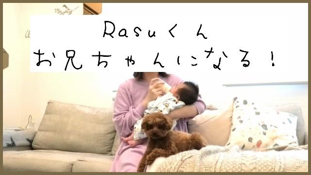 f:id:taruto-rasuku_maaya:20200315002825j:image