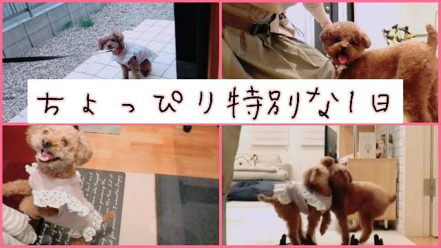 f:id:taruto-rasuku_maaya:20200331153413j:image