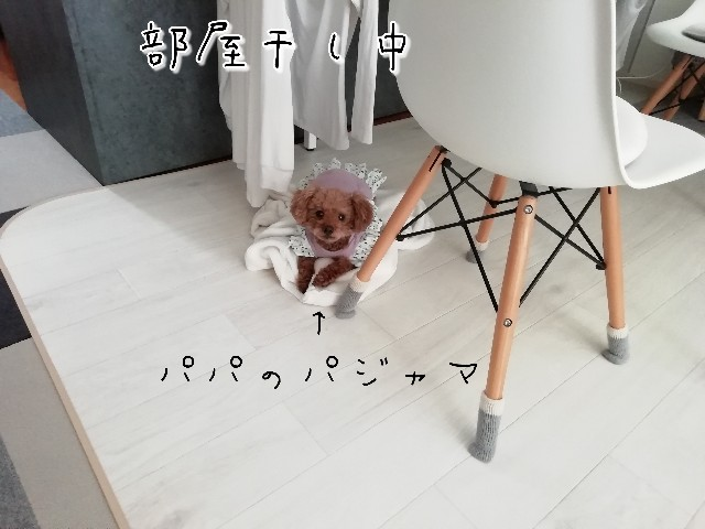 f:id:taruto-rasuku_maaya:20200401232239j:image