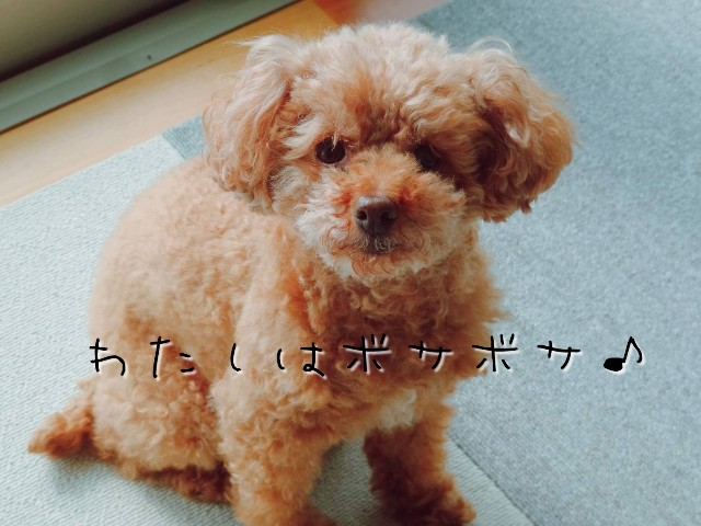 f:id:taruto-rasuku_maaya:20200426212538j:image