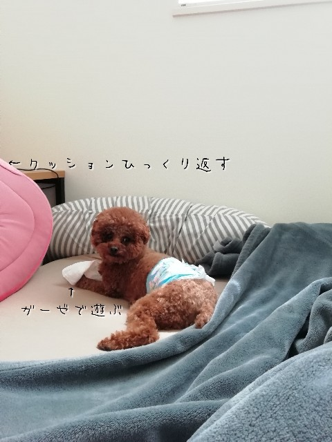 f:id:taruto-rasuku_maaya:20200429230712j:image