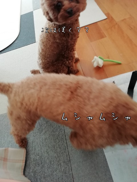 f:id:taruto-rasuku_maaya:20200430211635j:image