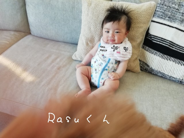 f:id:taruto-rasuku_maaya:20200523220653j:image