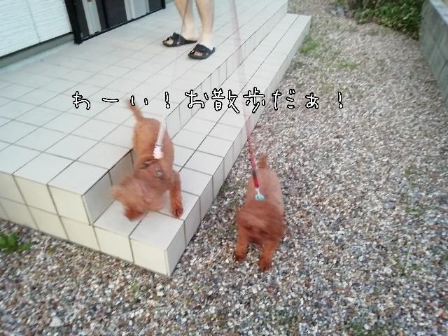 f:id:taruto-rasuku_maaya:20200620225444j:image