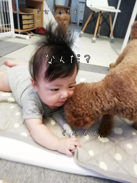 f:id:taruto-rasuku_maaya:20200715214707j:image