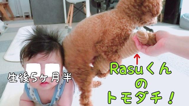 f:id:taruto-rasuku_maaya:20200715220007j:image