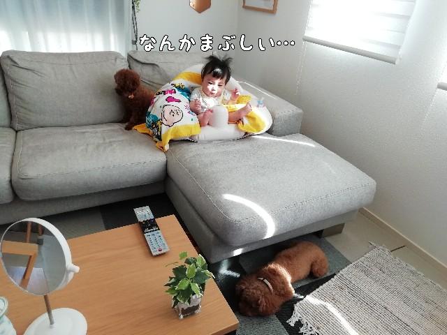 f:id:taruto-rasuku_maaya:20200813000750j:image