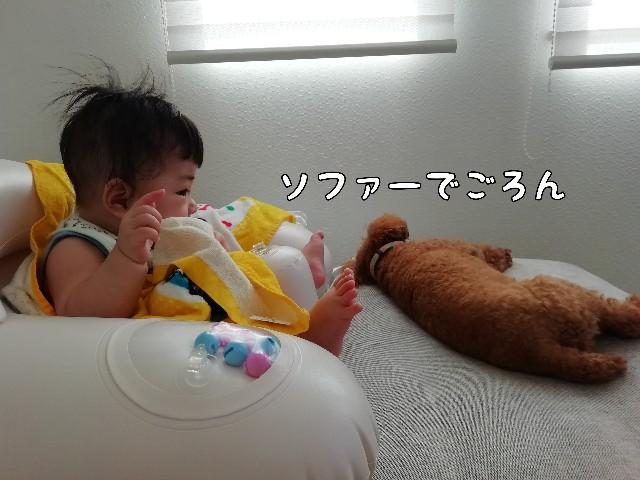f:id:taruto-rasuku_maaya:20200813230132j:image