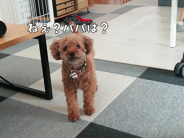 f:id:taruto-rasuku_maaya:20200820215700j:image