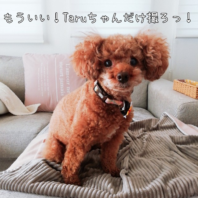 f:id:taruto-rasuku_maaya:20201028234711j:image