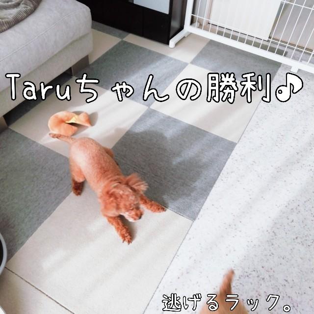 f:id:taruto-rasuku_maaya:20201028235134j:image