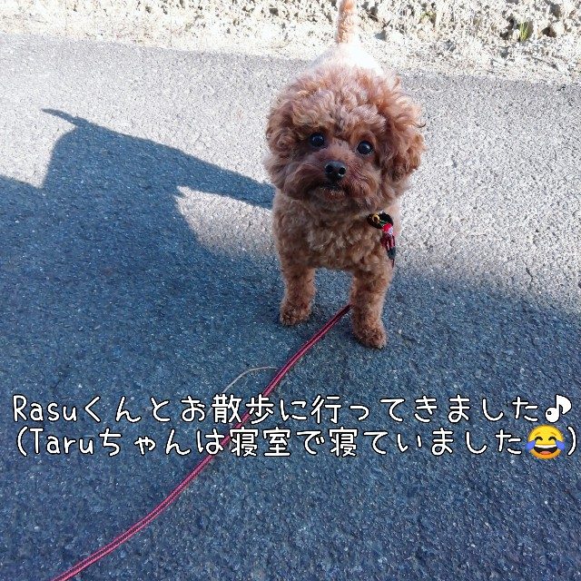 f:id:taruto-rasuku_maaya:20201031175109j:image