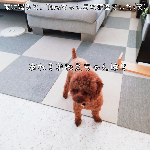 f:id:taruto-rasuku_maaya:20201031181210j:image