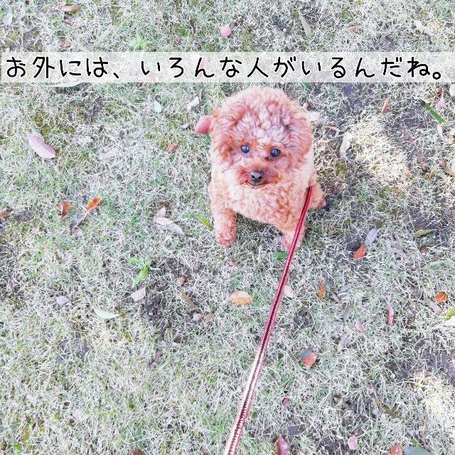 f:id:taruto-rasuku_maaya:20201103235138j:image
