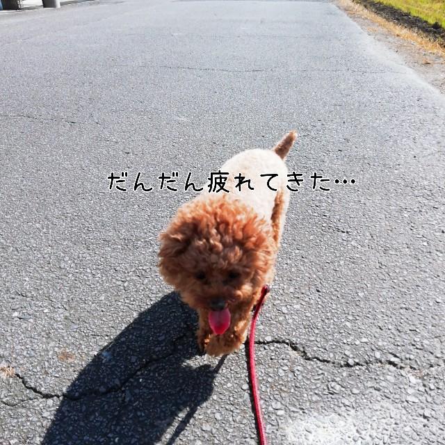 f:id:taruto-rasuku_maaya:20201103235310j:image