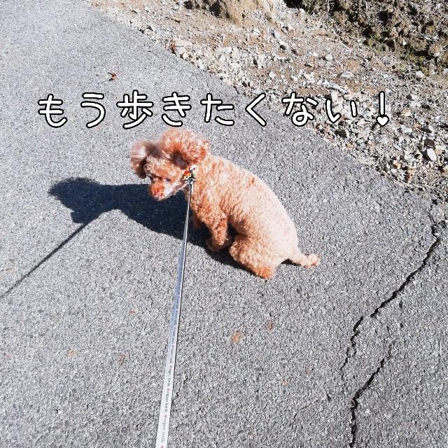 f:id:taruto-rasuku_maaya:20201104000748j:image