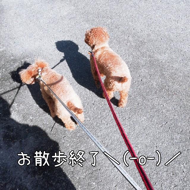 f:id:taruto-rasuku_maaya:20201104000842j:image