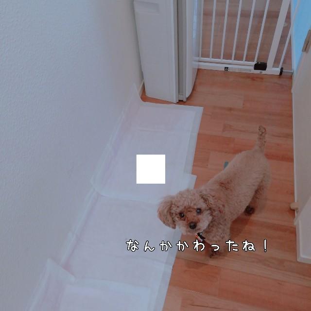 f:id:taruto-rasuku_maaya:20201126200048j:image
