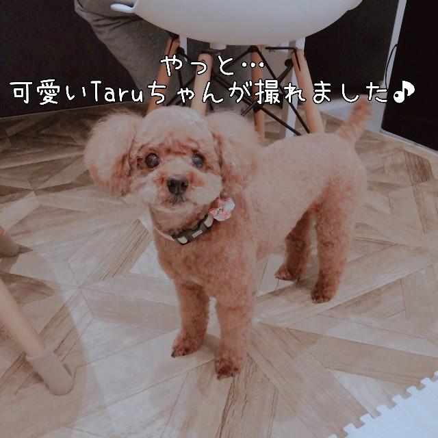 f:id:taruto-rasuku_maaya:20201128021133j:image