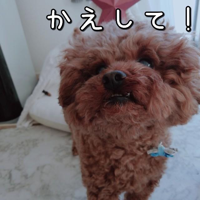 f:id:taruto-rasuku_maaya:20201201201312j:image