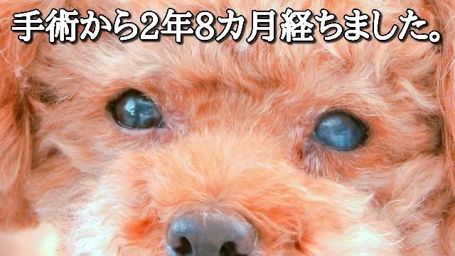 f:id:taruto-rasuku_maaya:20210128172649j:image