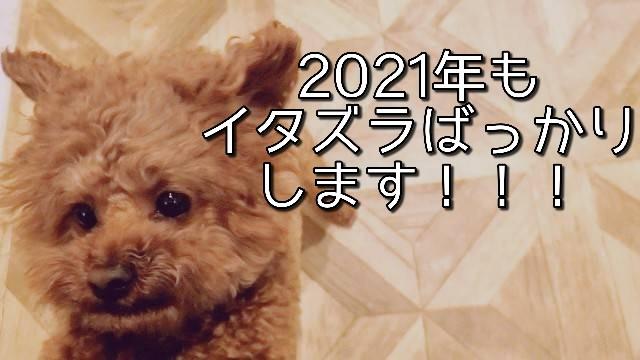 f:id:taruto-rasuku_maaya:20210201171732j:image