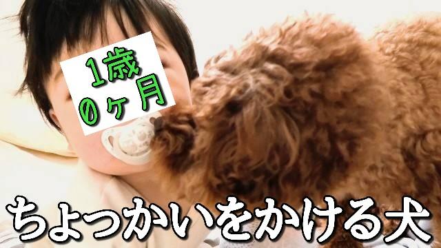 f:id:taruto-rasuku_maaya:20210206235423j:image