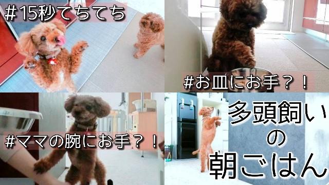 f:id:taruto-rasuku_maaya:20210207224608j:image