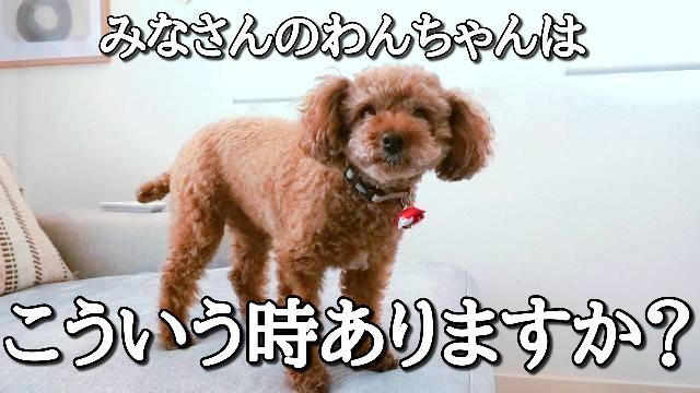 f:id:taruto-rasuku_maaya:20210213220011j:image