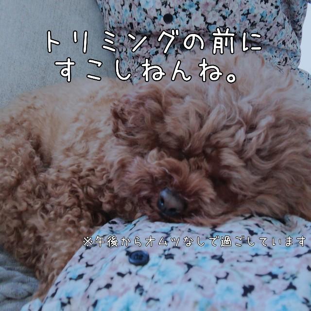 f:id:taruto-rasuku_maaya:20210219201946j:image