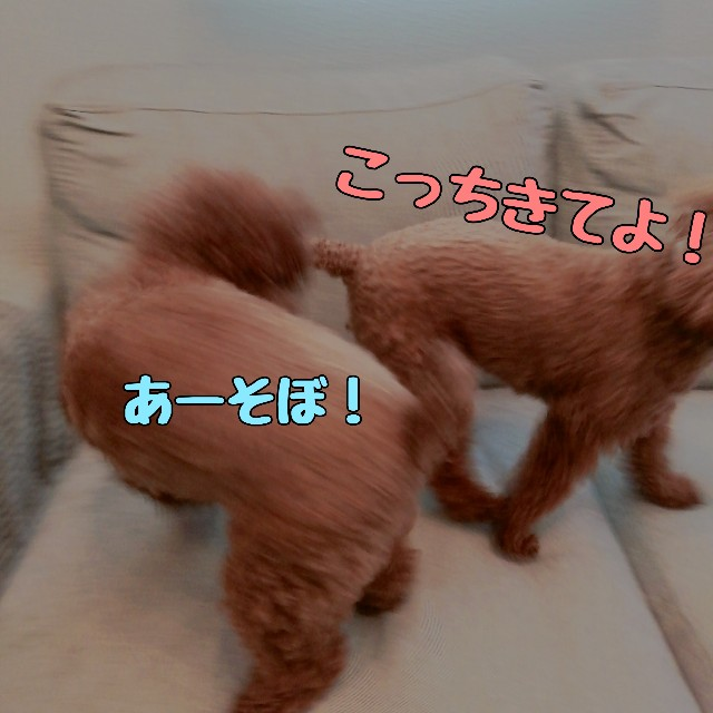 f:id:taruto-rasuku_maaya:20210416173413j:image