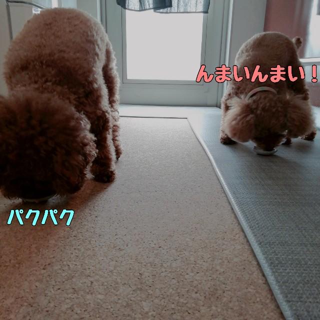 f:id:taruto-rasuku_maaya:20210416173720j:image