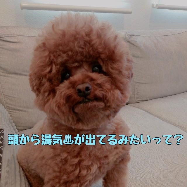 f:id:taruto-rasuku_maaya:20210417192656j:image