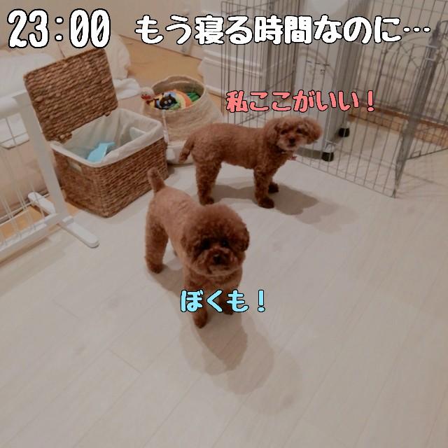 f:id:taruto-rasuku_maaya:20210418185023j:image