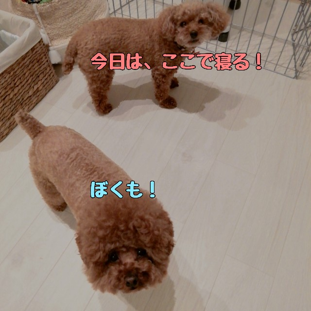 f:id:taruto-rasuku_maaya:20210418185354j:image