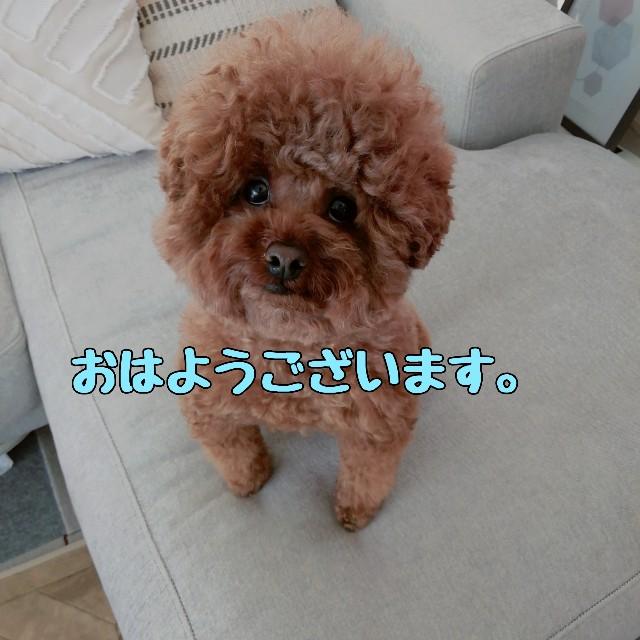 f:id:taruto-rasuku_maaya:20210419235659j:image