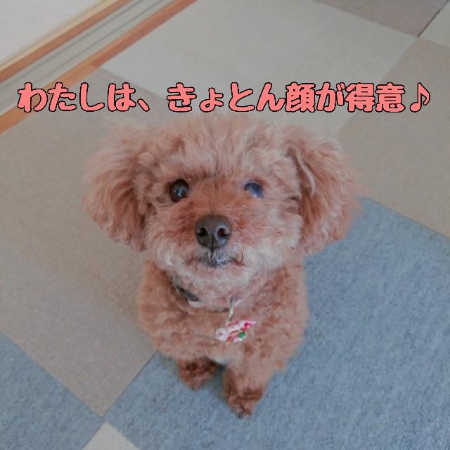 f:id:taruto-rasuku_maaya:20210420000723j:image