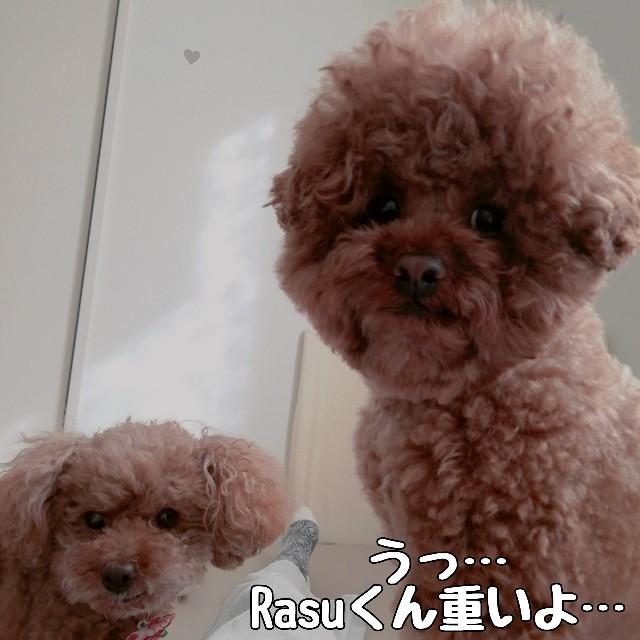 f:id:taruto-rasuku_maaya:20210420001108j:image