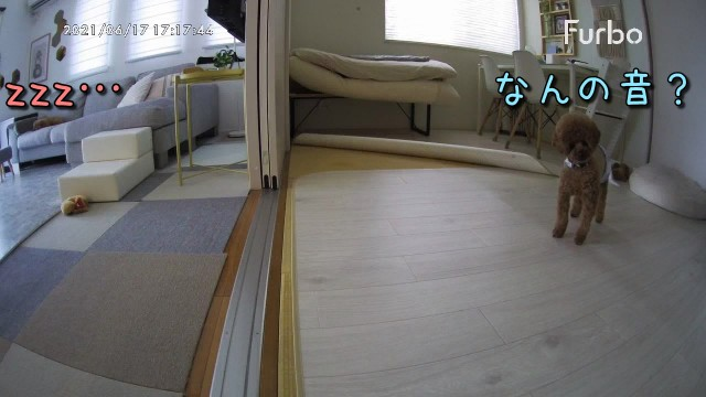 f:id:taruto-rasuku_maaya:20210617192037j:image