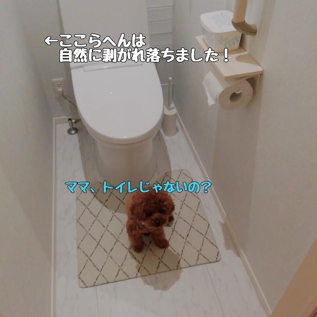 f:id:taruto-rasuku_maaya:20210708230020j:image