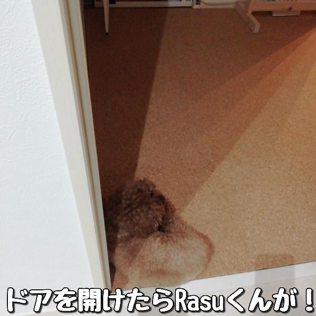 f:id:taruto-rasuku_maaya:20210713223442j:image