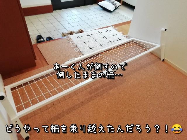 f:id:taruto-rasuku_maaya:20210810222217j:image