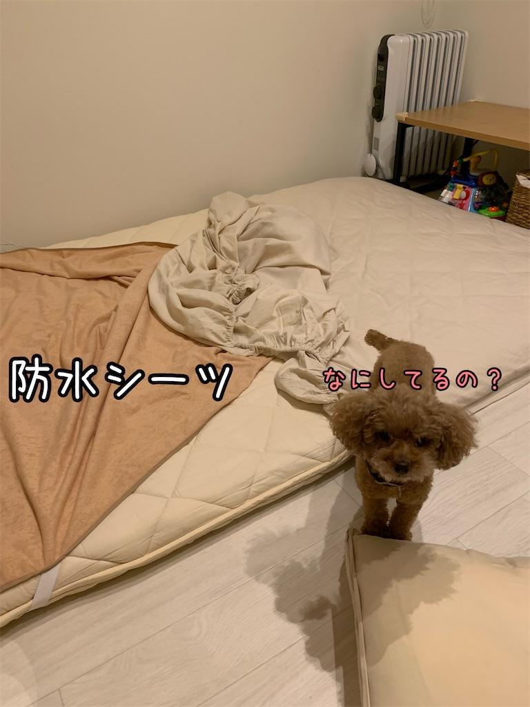f:id:taruto-rasuku_maaya:20210829213401j:image